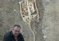 不行思议的佳丽鱼骸骨